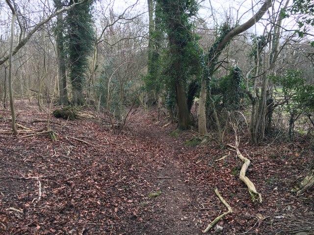 Path by Buckland Hoo