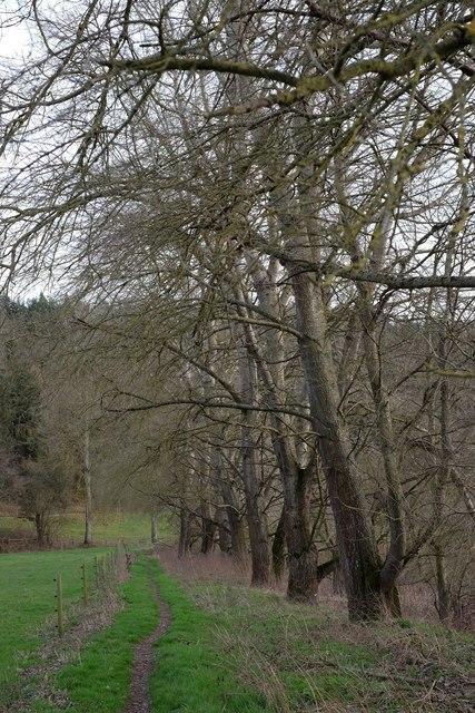 Wye Valley Walk near How Caple