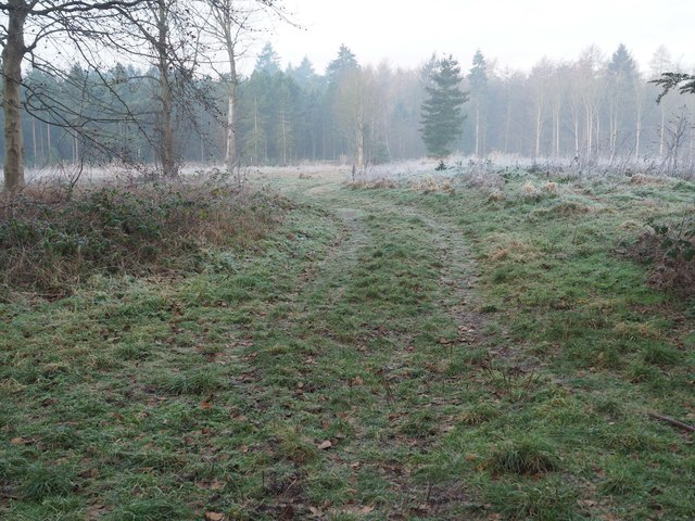 Meandering forest track