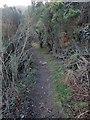 J3531 : Narrow path through tall whins by Eric Jones