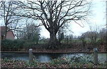 TL6400 : Fryerning Pond by David Howard