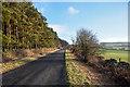 NZ0557 : Road alongside Watchhill Plantation by Trevor Littlewood