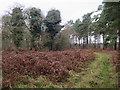 TF7609 : Path around Narford Wood by Hugh Venables