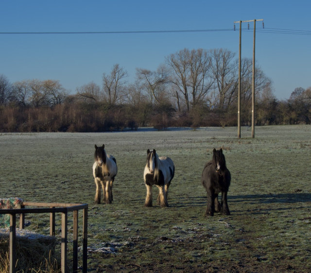 Ponies near Dunswell