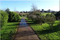 SO8845 : Evergreen Shrubbery, Croome Park by Philip Halling