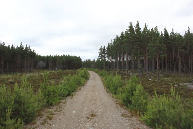 Forest track, Inshriach Forest