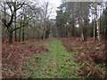 TF7709 : Track by Narford Wood by Hugh Venables