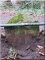SJ2485 : National Trust boundary stone (1) on Thurstaston Common by John S Turner