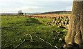 SE2250 : Towards Prospecthouse Farm by Derek Harper