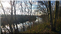 SE4627 : Through trees to the River Aire alongside RSPB Fairburn Ings Nature Reserve by Phil Champion