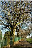 SE2853 : Churchyard wall and railings, Otley Road by Derek Harper
