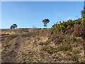 TQ4829 : The Vanguard Way on the Ashdown Forest by Marathon