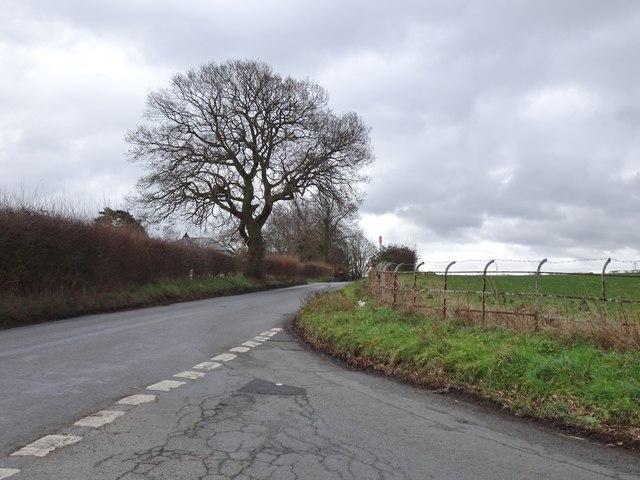 Beechtree Lane