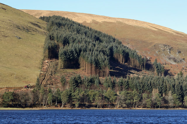 Forestry clear-fell operations by St Mary's Loch