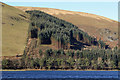 NT2321 : Forestry clear-fell operations by St Mary's Loch by Walter Baxter