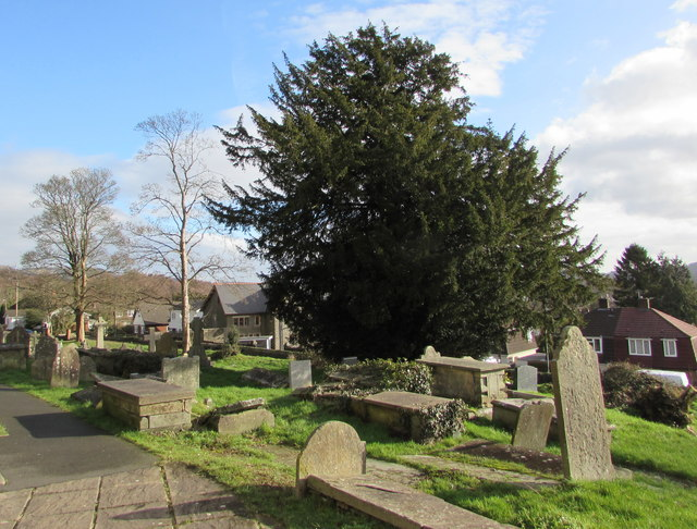 Yew in St Barrwg's churchyard, Bedwas