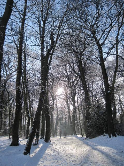Snowy January Woolton Woods