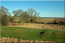 NY0265 : Natural Defences at Caerlaverock Castle by Mary and Angus Hogg