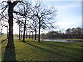 SE3028 : Trees near Middleton Park lake by Stephen Craven