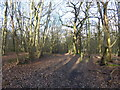 TQ1093 : Path in Oxhey Woods by Marathon