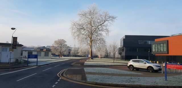 Frost on the trees at the Earley Gate of the University of Reading