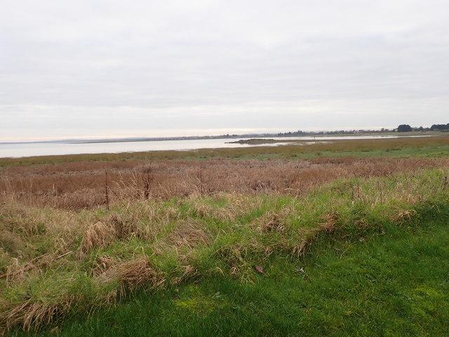 Saltings on the Fane Estuary