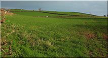 SX8460 : Field above Longcombe by Derek Harper