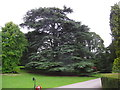 SO7336 : Tree in Eastnor Castle Arboretum by Eirian Evans