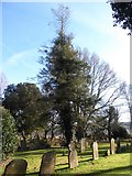 TQ7924 : St James the Great, Ewhurst Green: churchyard (e) by Basher Eyre