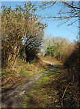 SX9066 : Path into Nightingale Park by Derek Harper
