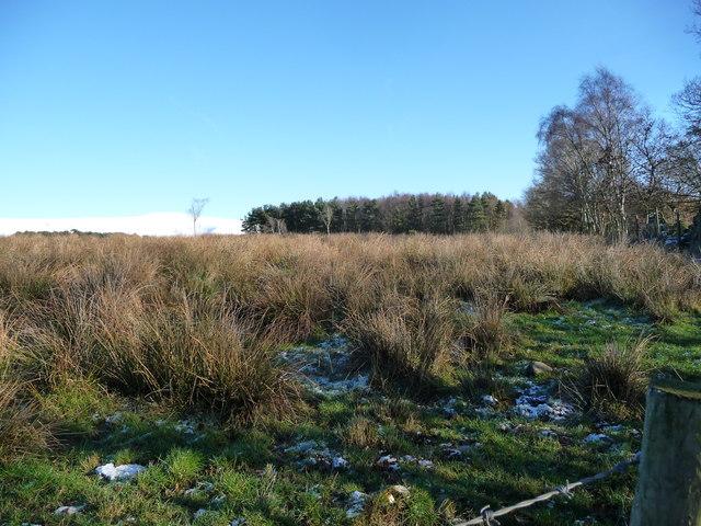 Rough grassland west of Pinglemoor Plantation