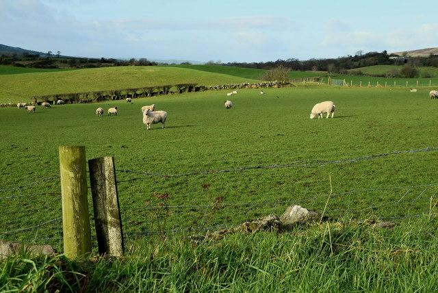 Sheep, Eskeradooey