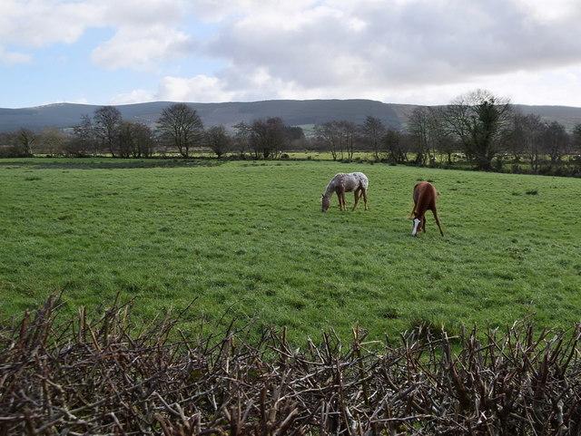 Horses in a field, Eskeradooey