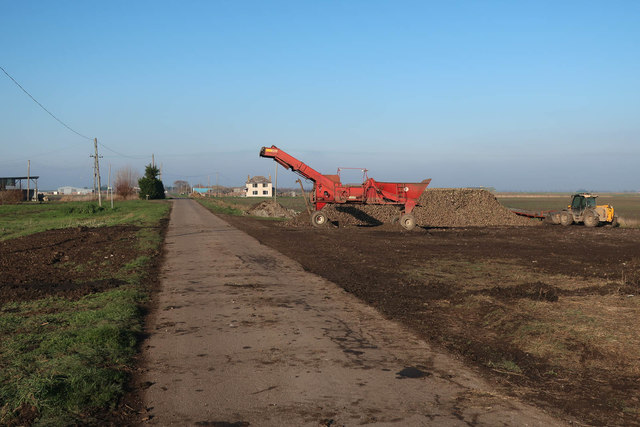 Sugar beet loader by Main Drove