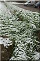 SX8764 : Snow at Gallows Gate by Derek Harper
