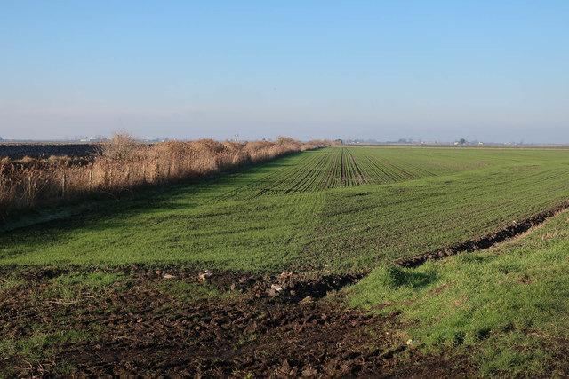 Field by the railway