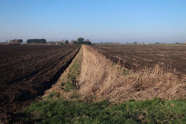 Reedy ditch, North Fen