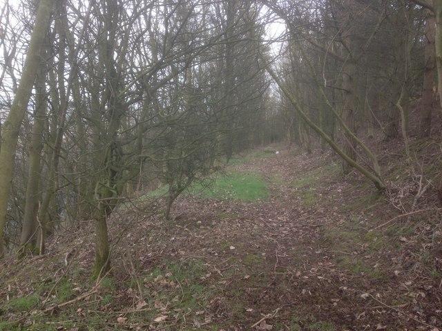 Woodland path at New Hey Road