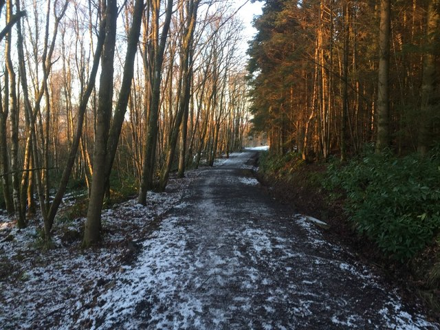Path, Dykedale Wood