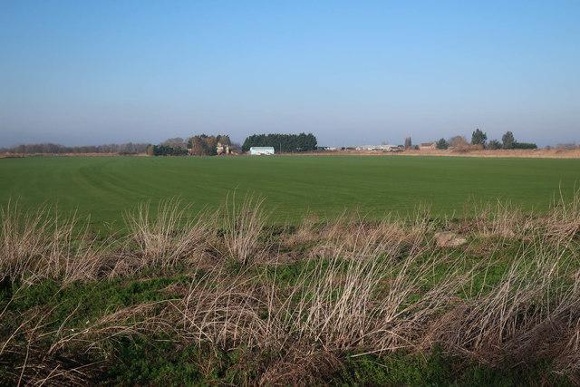 Turf field, North Fen