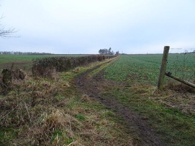 Field margin path, Wintonhill