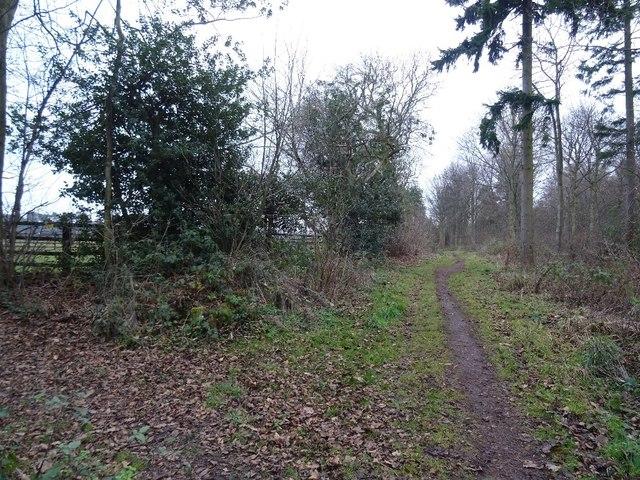 Corner of the wood, Winton Estate