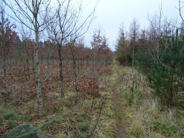 Young woodland, Winton Hill