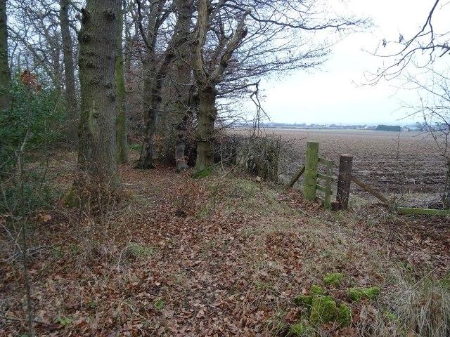 Woodland corner, Winton Hill