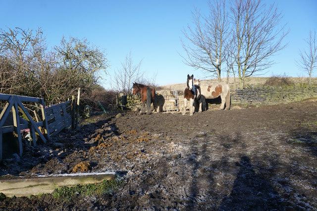 Kirklees Way at Heightlands Farm
