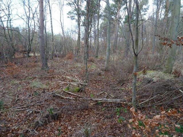 Gully, Winton woodlands