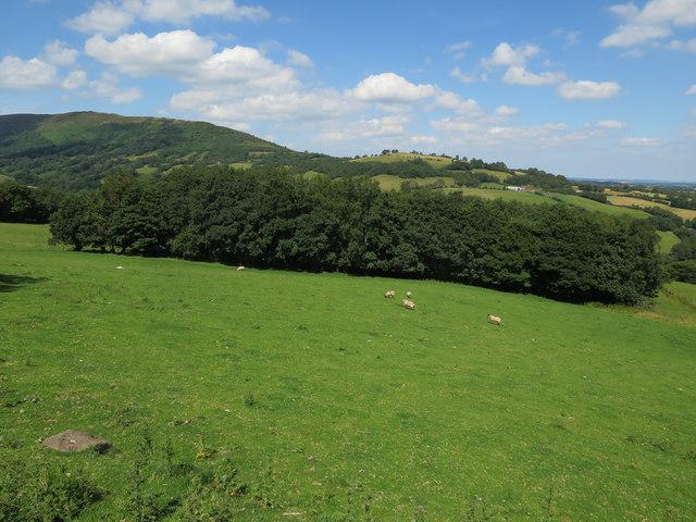 Field near Oldhouse Farm