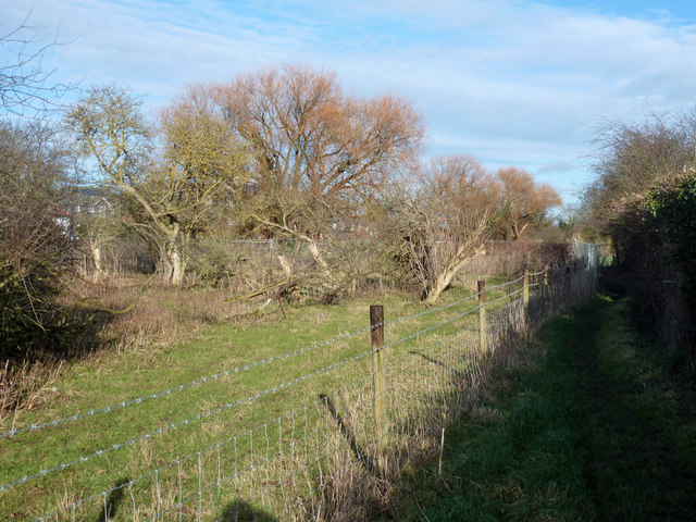 Narrow wooded field and footpath