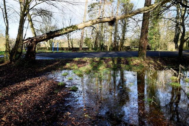 Fallen tree, Cranny, Omagh