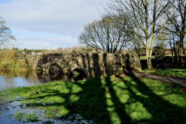 Tree shadows, Cranny